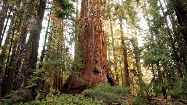 San Francisco, Yosemite, Sequoias, Oh My!